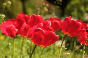 spring home maintenance tips for vacant homes