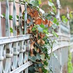 Foreclosed House Fence Image