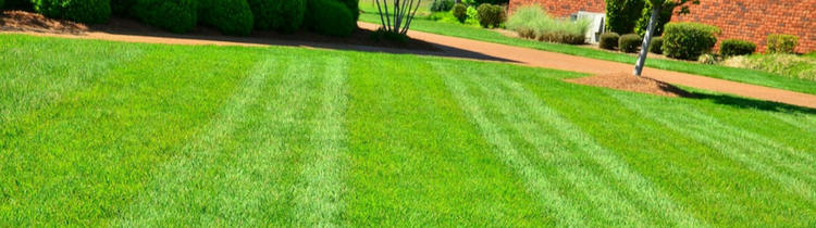 Lawn Care Mistakes That Can Ruin Your Yard In Raleigh