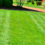 Lawn Care Mistakes That Can Ruin Your Yard In Knoxville TN