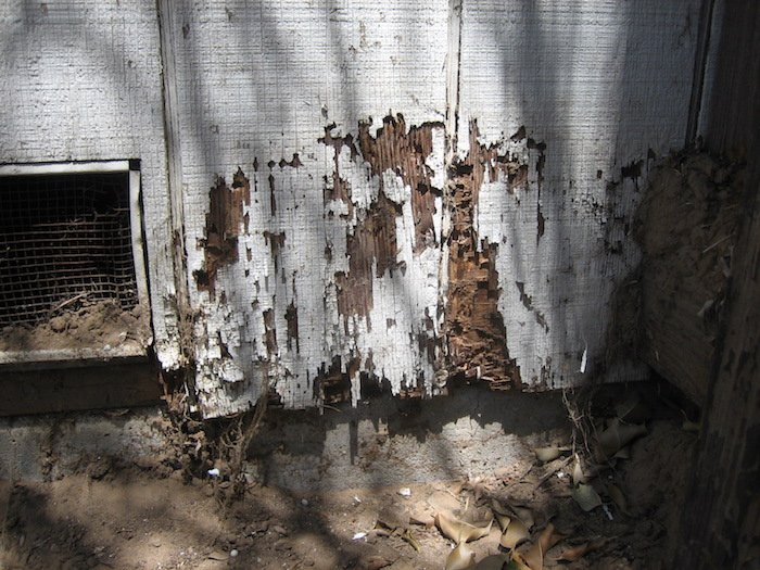 selling a house with termite damage