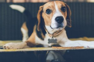 Helping Your Dog Adjust To New Home