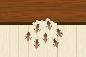 Selling a Home With Termites in Maryland
