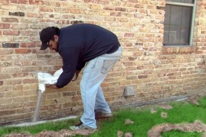 Termite Treatment in Maryland