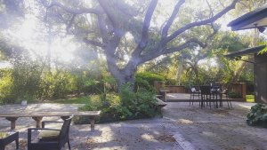 Tree in the backyard of a Camarillo house