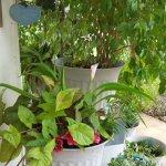 fronmt porch flowers floresville tx