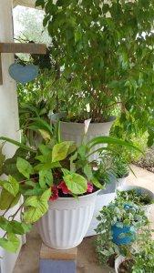 front porch flowers floresville tx
