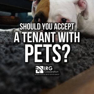 Should you accept a tenant with pets?