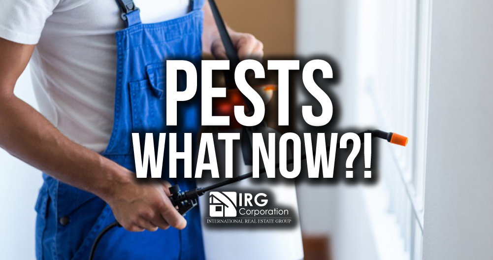 Pests?! What now?!
