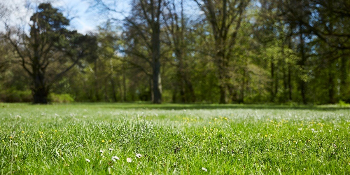 How to Sell Vacant Lots And Land Without A Realtor | grass and trees