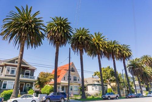 local real estate agent San Jose