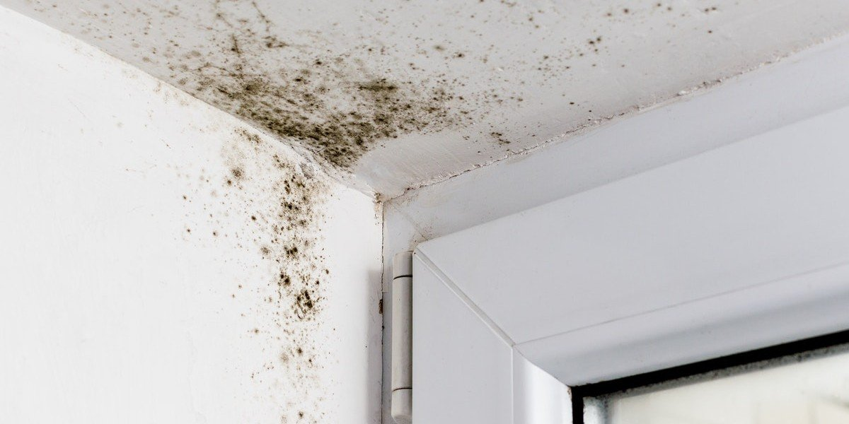 Sell A House With Mold