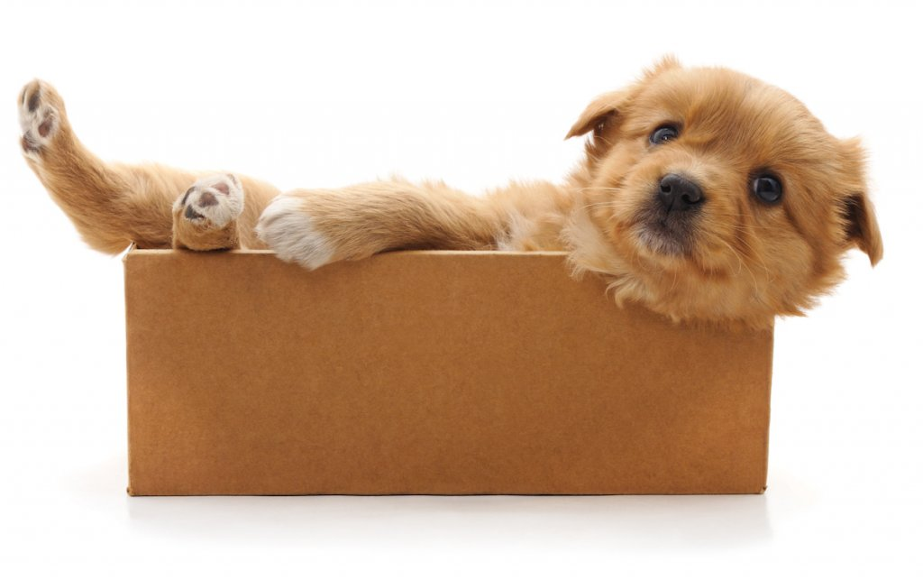 3 Reasons Your Dog Wants You to Sell Your House to an Investor