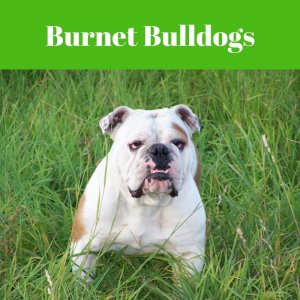 we buy houses burnet