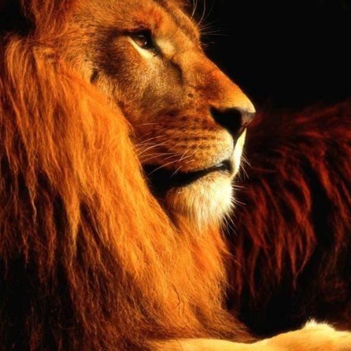 The Lion Team logo