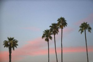 Sol-Mar-REI-California-Palms